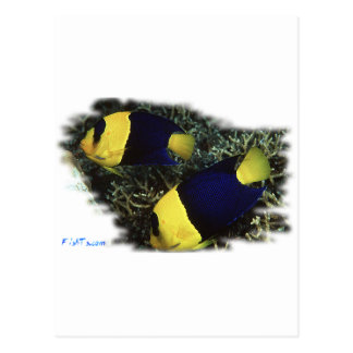 Marine Aquarium Fish by FishTs.com Postcards