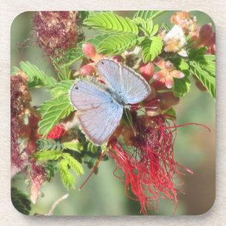 Marine Blue Butterfly Beverage Coaster