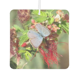 Marine Blue Butterfly Car Air Freshener