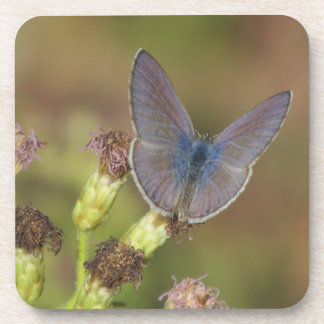 Marine Blue Butterfly Coasters