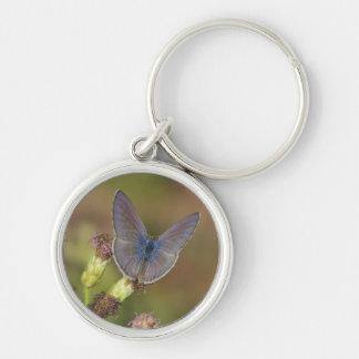 Marine Blue Butterfly Keychain