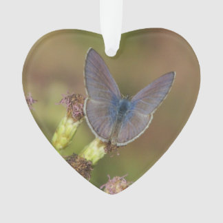 Marine Blue Butterfly Ornament