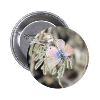 Marine Blue Butterfly Pinback Button