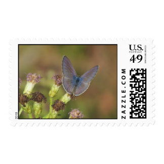 Marine Blue Butterfly Postage