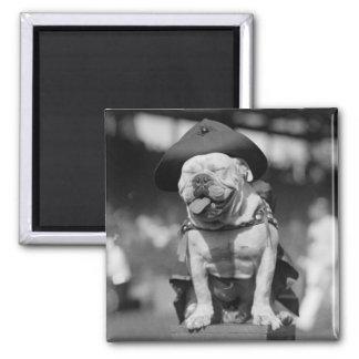 Marine Corps Mascot, 1920s Magnet