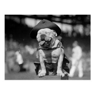 Marine Corps Mascot, 1920s Postcard