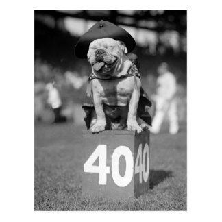 Marine Corps Mascot, 1920s Postcards