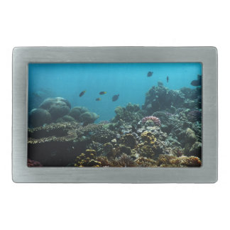 Marine Environment in the Pacific Belt Buckle