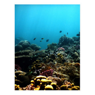 Marine Environment in the Pacific Postcard