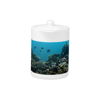 Marine Environment in the Pacific Teapot