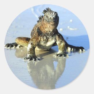 Marine iguana Galapagos Stickers