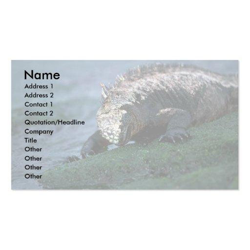 Marine Iguana Grazing On Algae Double-Sided Standard Business Cards (Pack Of 100)