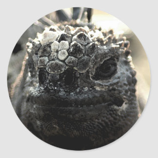 Marine Iguana Head Shot Sticker