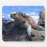 Marine Iguana Mousepads