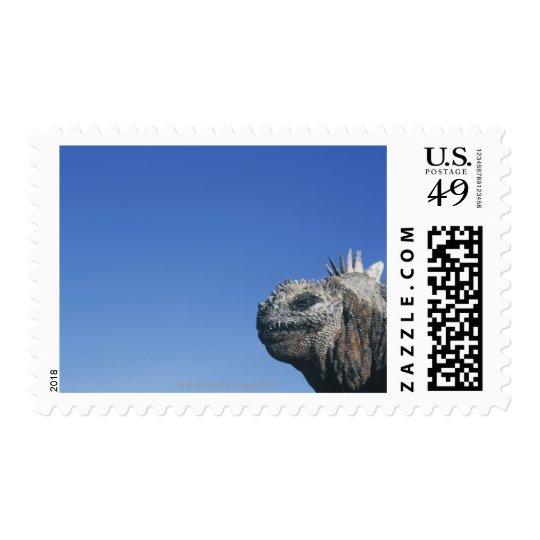 Marine Iguana Postage