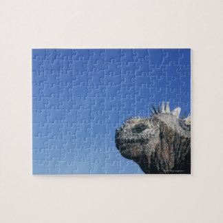 Marine Iguana Puzzle