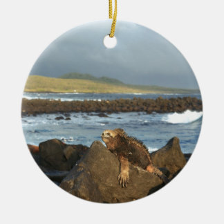 Marine iguana relaxing Galapagos Islands coastline Ceramic Ornament