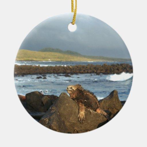 Marine iguana relaxing Galapagos Islands coastline Christmas Ornament
