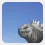 Marine Iguana Square Sticker