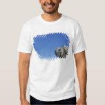 Marine Iguana T-Shirt