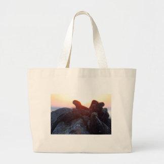Marine iguanas at sunset Galapagos Islands Bags