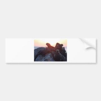 Marine iguanas at sunset Galapagos Islands Bumper Sticker