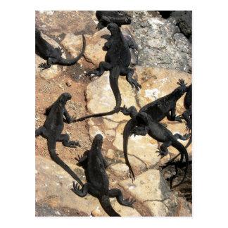 Marine Iguanas, Islas las Plazas, Galapagos Postcard