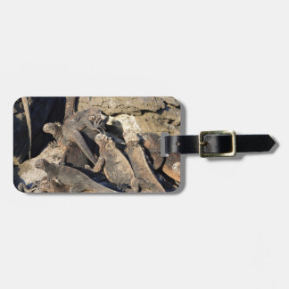 Marine iguanas on volcanic rock, Galapagos Islands Tags For Bags