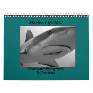Marine Life 2011 Calendar