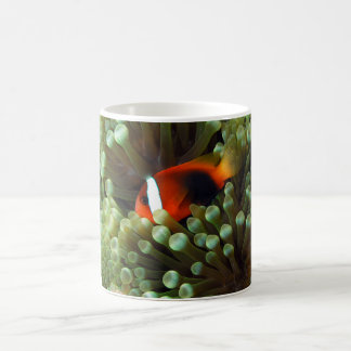 Marine life mug clown fish & anemone