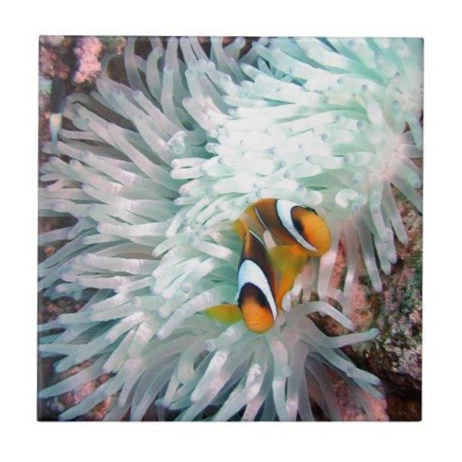 Marine Life Ceramic Tiles