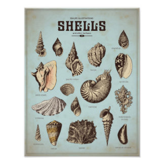 Marine poster with various sea shells