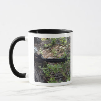 Marine uses a tree for cover and concealment mug