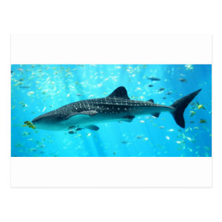 Marine Water Chic Stylish Cool Blue Whale Shark Postcard