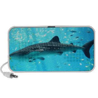 Marine Water Chic Stylish Cool Blue Whale Shark iPod Speaker