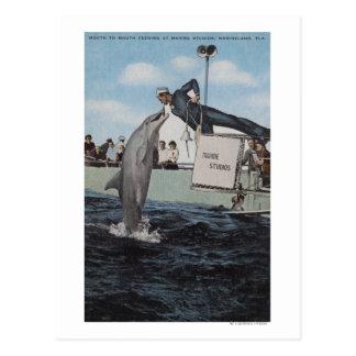 Marineland, Florida - Sailor Mouthfeeding Postcard