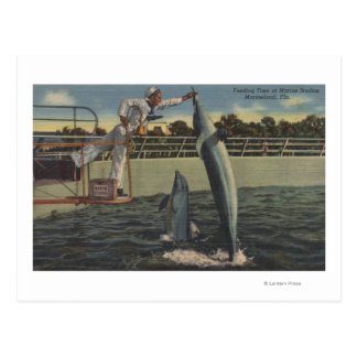 Marineland, Florida - View of Feeding Porpoises Postcard