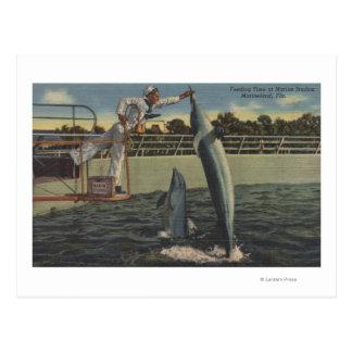 Marineland, Florida - View of Feeding Porpoises Post Card