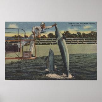 Marineland, Florida - View of Feeding Porpoises Poster