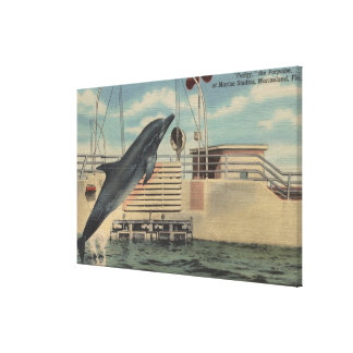 Marineland, Florida - View of Pudgy the Stretched Canvas Print