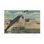 Marineland, Florida - View of Pudgy the Postcard