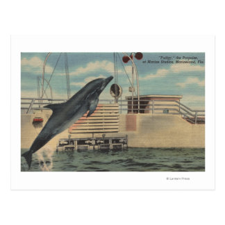 Marineland, Florida - View of Pudgy the Post Cards