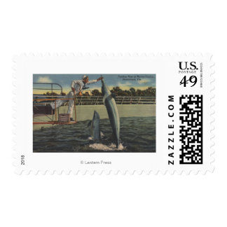 Marineland, la Florida - opinión masopas de Timbre Postal