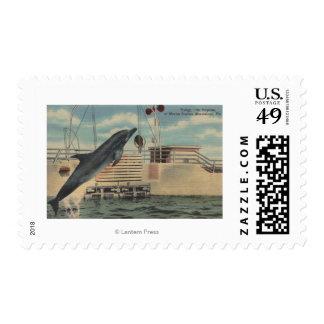 Marineland, la Florida - vista del rechoncho Sellos Postales