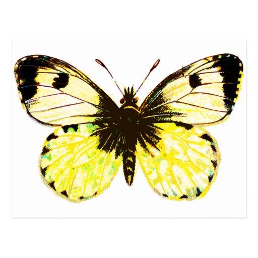 Mariposa 02 postal