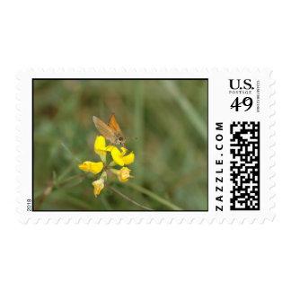 Mariposa 2 sellos