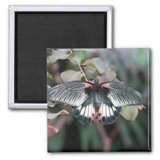 Mariposa 4 iman de frigorífico