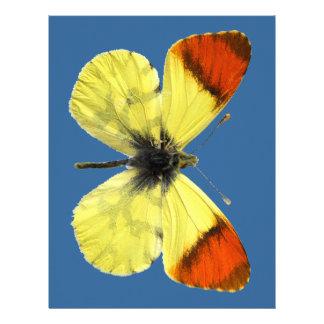 Mariposa aislada del naranja de Marruecos Membretes Personalizados
