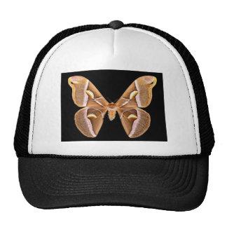 Mariposa aislada del silkmoth del Ailanthus Gorras De Camionero