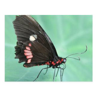 Mariposa al borde de una hoja tarjeta postal